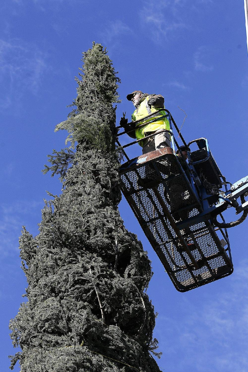 Arkansas Democrat-Gazette/THOMAS METTHE -- 11/10/2018 -- James Short with the Little Rock Parks Department unwraps the 65-foot tall white fir Christmas Tree on Saturday morning, Nov. 10, 2018, at Capitol Plaza in in downtown Little Rock. The tree will be lit on Monday, Nov. 19 at 5:30 p.m. during the Bright the Night lighting ceremony.