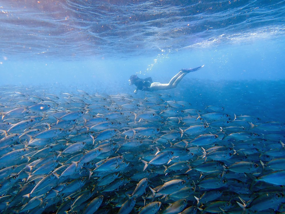 The author dives and swims with scores of fish near the Pink Beach snorkel site off the coast of Bonaire. The small Caribbean island is a beacon of hope for restoring coral reefs. Photo by Erik Freeland via The New York Times