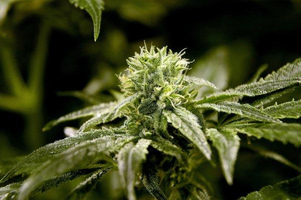 State's Rx pot sales hit $2.2M