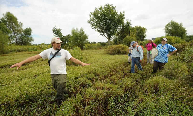 Wetland Plants Biology and Ecology