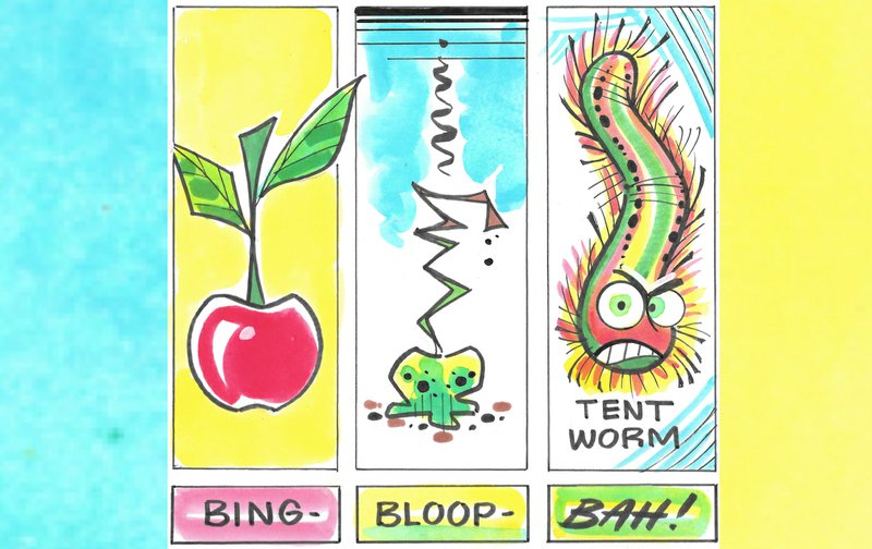 IN THE GARDEN: Battling bag worms starts with identifying