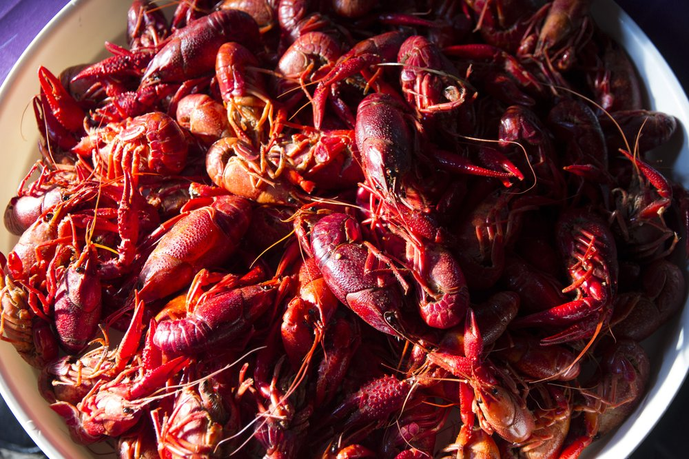 Boiled crawfish, a Cajun delicacy, as served at The Venetian in Thibodaux, La. Photo by Dave G. Houser via TNS