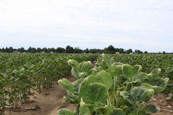 Arkansas panel approves new rules for dicamba's use in 2020