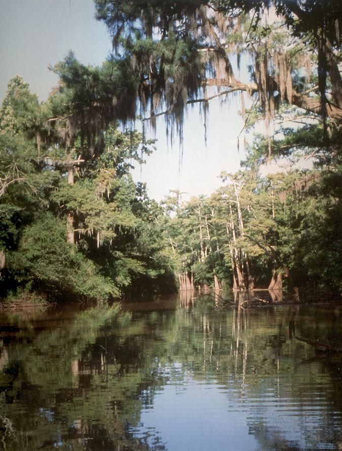 Bayou Bartholomew, which is about 359 miles long, starts about 10 miles north of Pine Bluff. (Bayou Bartholomew Alliance)