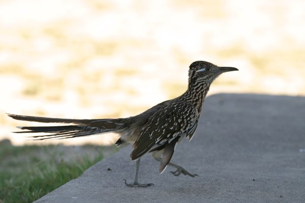 Free-ranging birds are found all over