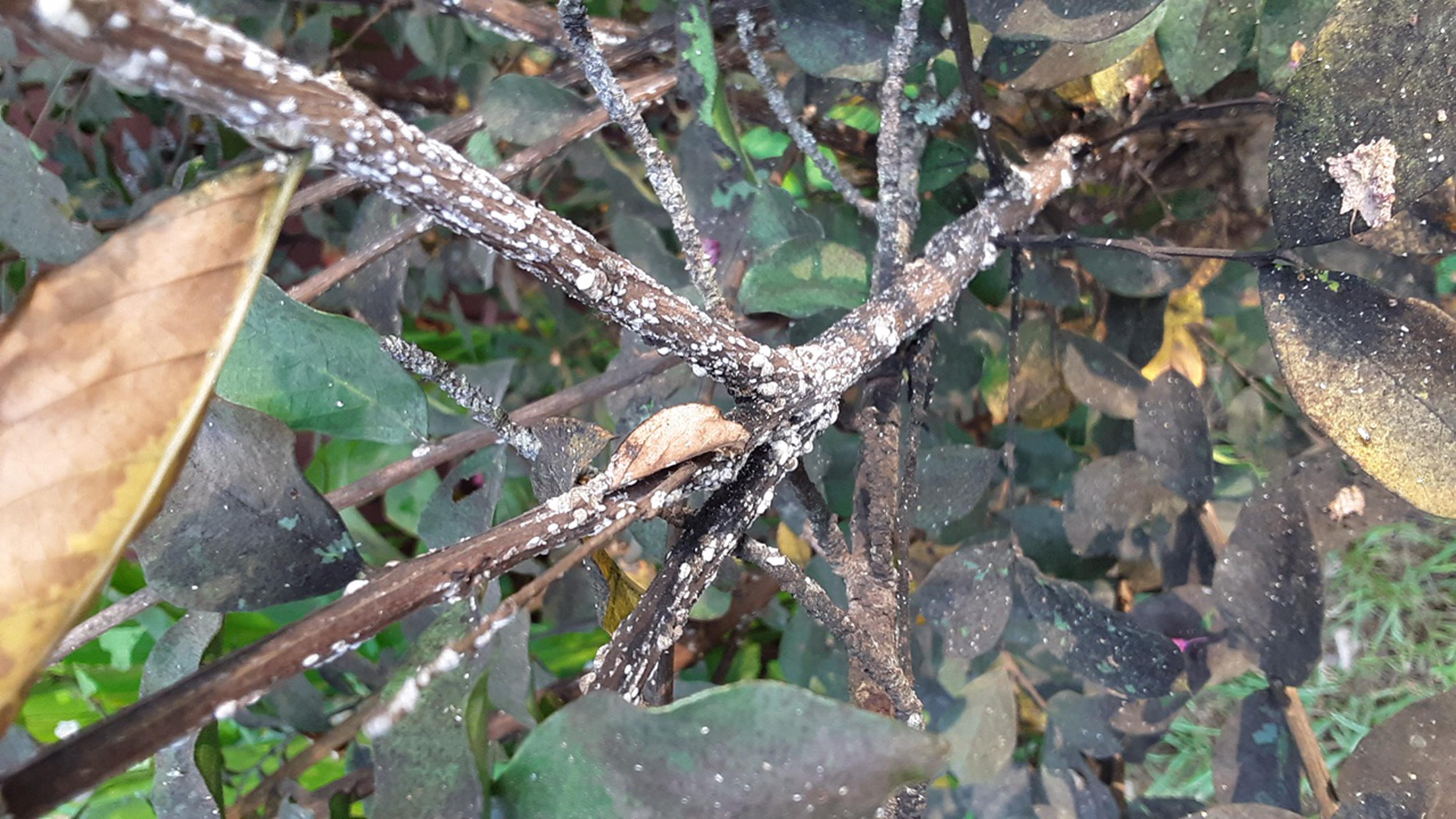 IN THE GARDEN: Crape myrtles, 'Endless Summer' hydrangeas, okra and more