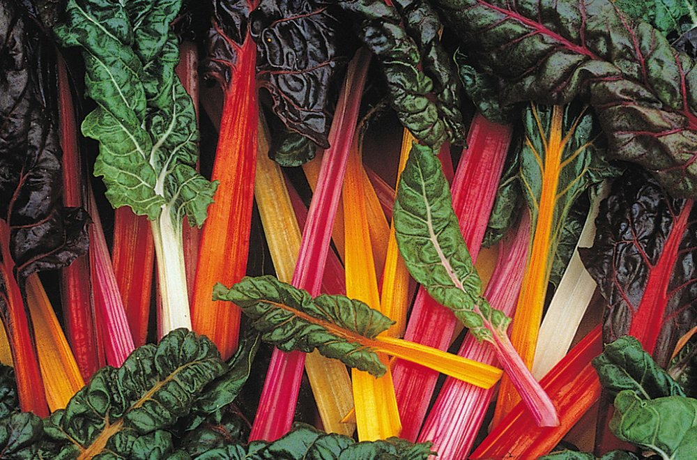 """Swiss chard """"Bright Lights,"""" a 2019 Arkansas Diamonds selection, is edible as well as colorful. (Photo via Arkansas Green Industry Association)"""