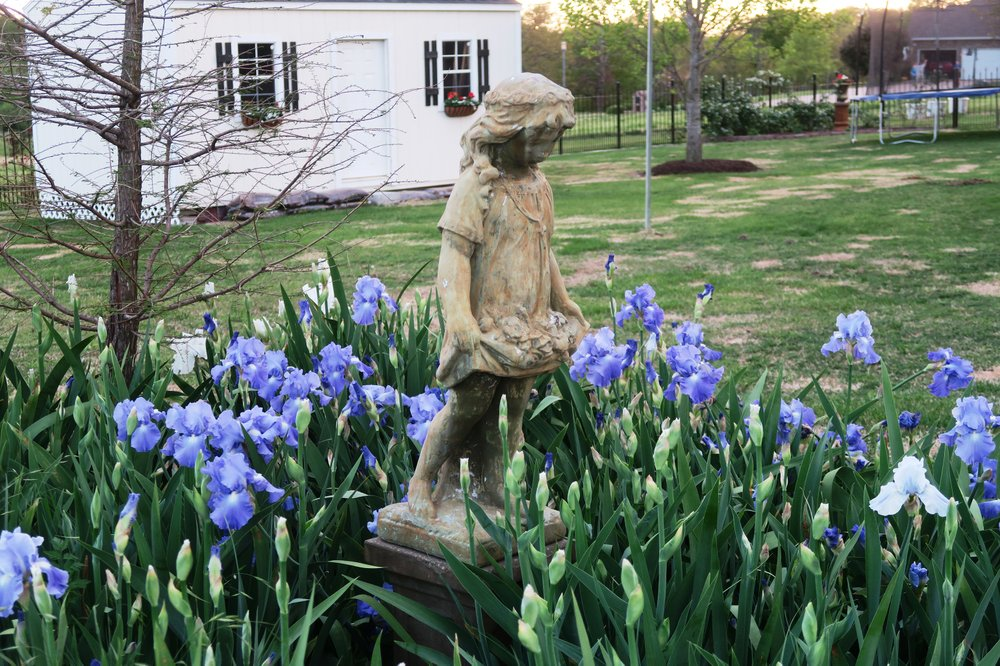 The main reasons irises stop blooming are overcrowding and lack of sunlight. (Special to the Democrat-Gazette/JANET B. CARSON)