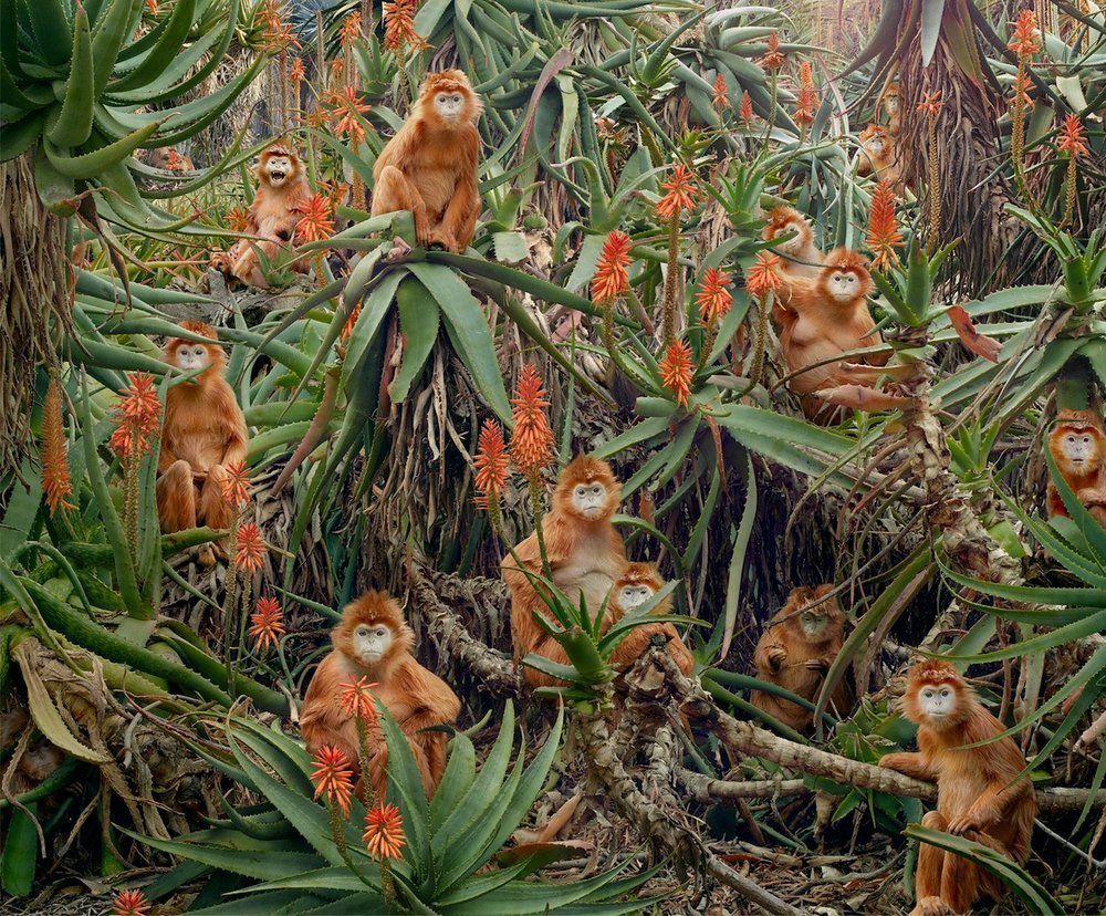 Untitled #174 (Red Monkeys) by Simen Johan goes on display today at the Windgate Center of Art & Design at the University of Arkansas at Little Rock.