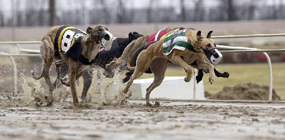 Track closing, but dogs won't go homeless