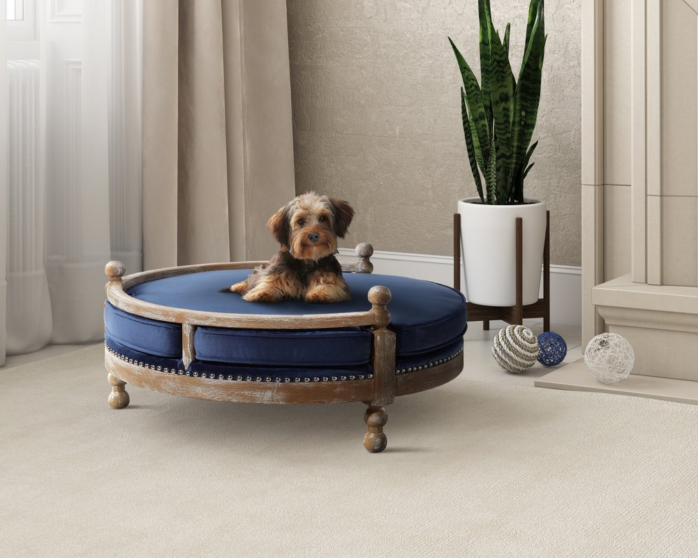 Market Emerges For Home Matching Pet Furniture