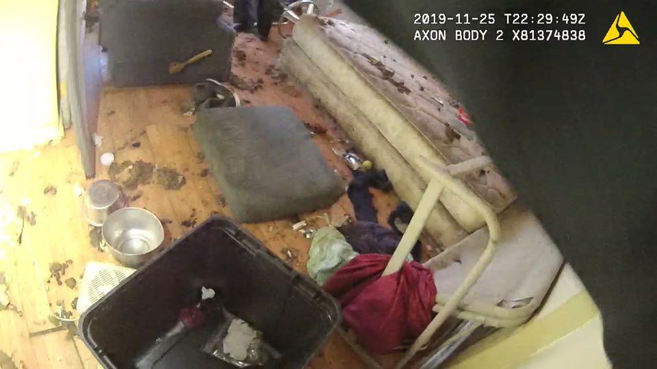 12 dogs seized from unsanitary Jonesboro home