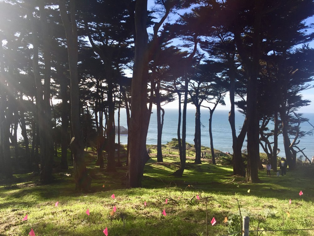Hikers are never far from the ocean on the Coastal Trail, which is bordered by cypress and eucalyptus trees. The 1.7-mile route follows the path of a railroad that operated there in the 1880s. MUST CREDIT: Washington Post photo by Helen Carefoot.