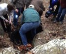 Arkansas Game & Fish Commission conduct Bear Den survey